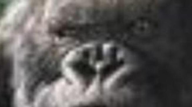 Co obsahuje DVD King Kong: Deník režiséra (Peter Jackson)