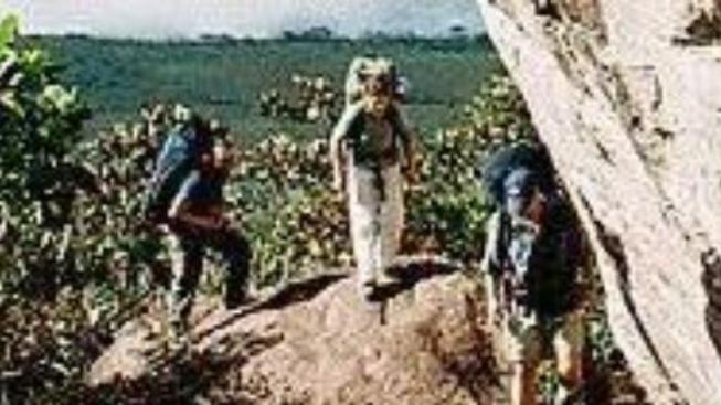 O čem je film Amazonia Vertical