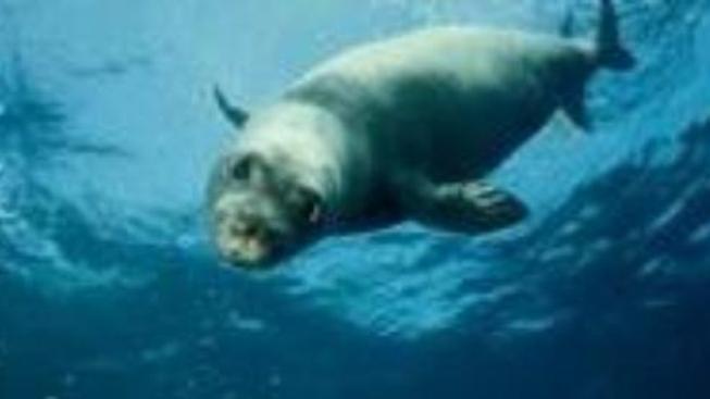 O čem je film Mír s tuleni