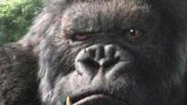 Zahraniční ohlasy filmu King Kong