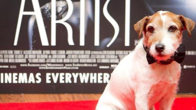 Teriér Uggie z oscarového filmu The Artist má tlapky v Hollywoodu
