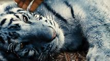 Rodinný film Modrý tygr byl oceněn v Bukurešti